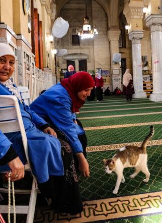 イスラム教で犬は不浄?猫は?