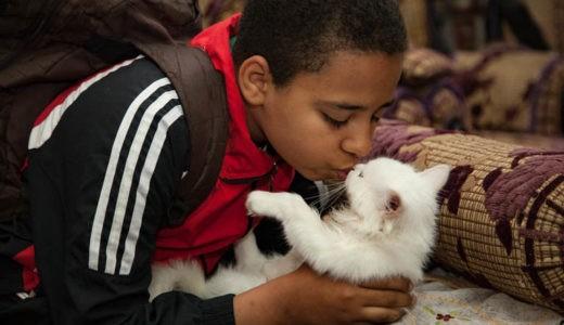 イスラム教では犬は不浄って本当?その理由は?猫はどう?