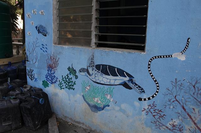 アポ島はビーチの目の前でウミガメと泳げる!<セブ島>【観光とホテル情報】