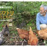 自然養鶏の笹村さんの絵本