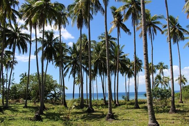 ポンソン島は西洋人リタイア組の楽園 <フィリピン>