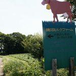 東京の牧場「磯沼ミルクファーム」。牛とのふれ合いに癒やされる