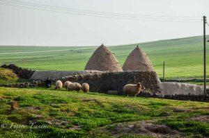 シリアの農村