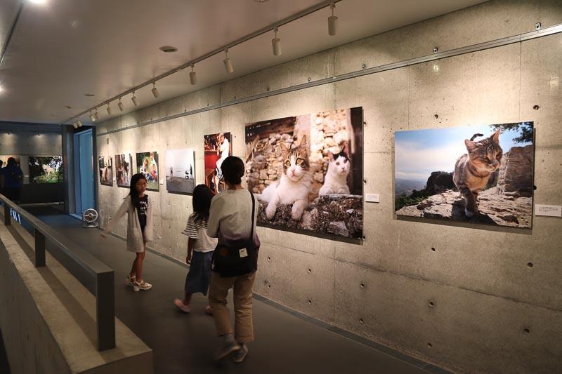 新美敬子さん写真展:世界の猫と犬を撮り続ける写真家