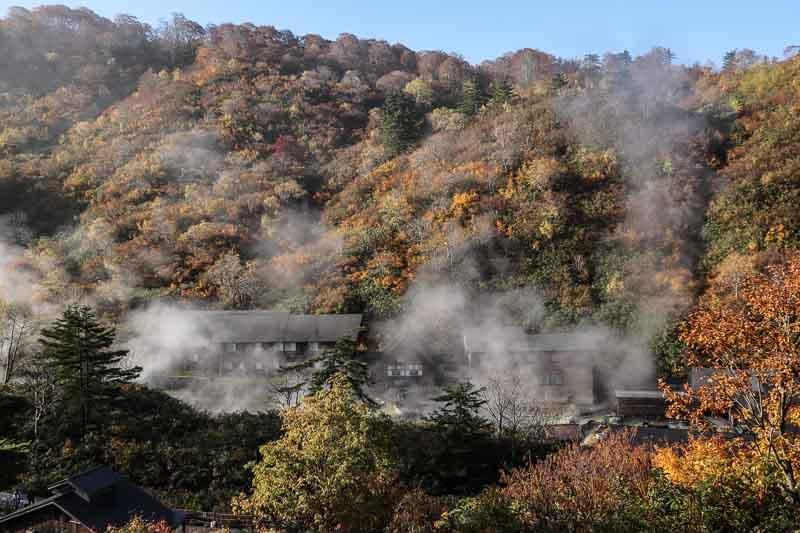 Tamagawa akita 7