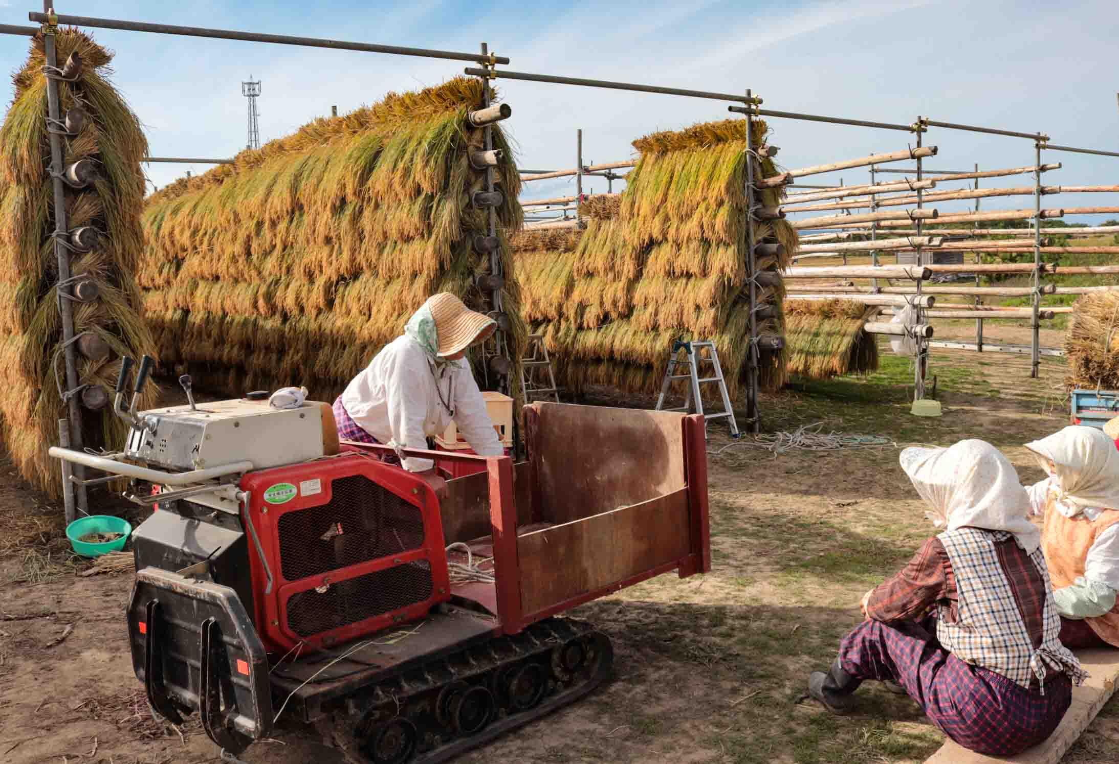 青森県の稲刈り